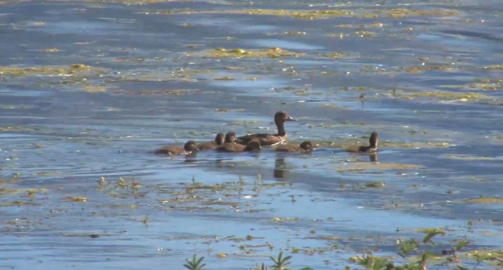 Video 2 - Ducks in a Row